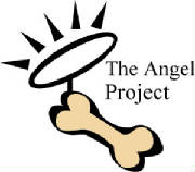 angel-project-2-color.jpg